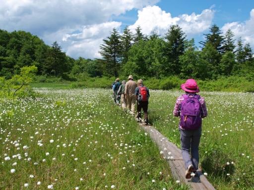 ワタスゲが咲く湿原の木道を歩く